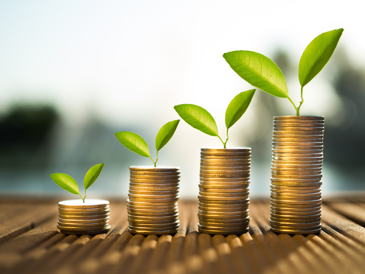 rows of stacked coins with a sprout on top
